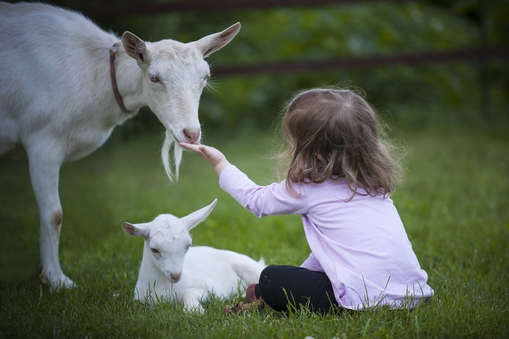 fetita cu o capra si un iedut